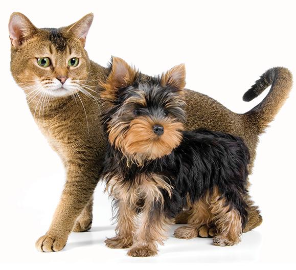 perro-gato-urineoff