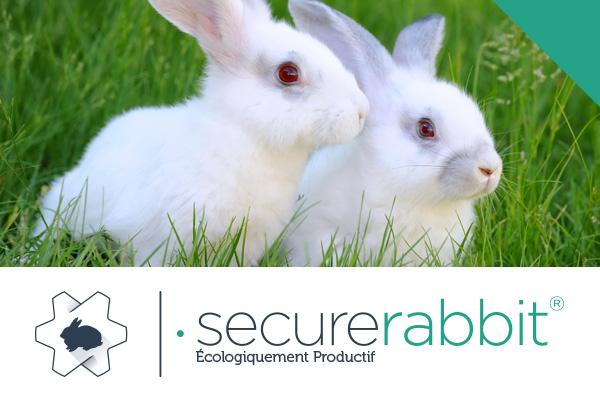 secure-rabit